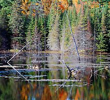 Fall Reflections by Robert Goulet