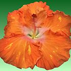 Orange Hibiscus Flower by Margaret Stevens
