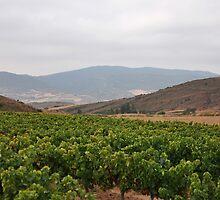 Vineyard near Cirauqui - Camino de Santiago by Hilda Rytteke