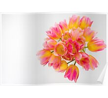colorful bouquet of tulips Poster