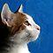 Cat Profile Shots