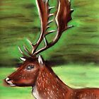 The Irish Deer by Alan Hogan