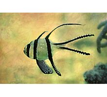 fishy 02 Photographic Print