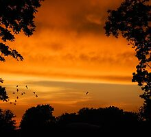 Sunset Storms by Lisa Jones Caldwell