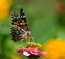 Lady Butterfly by Christina Rollo