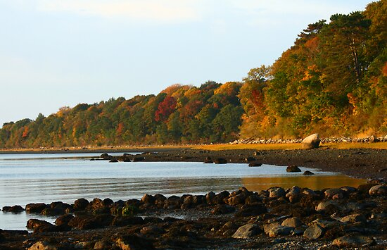 Shoreline Foliage by Christopher  Malatesta