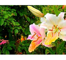 White Lily in the garden 10 Photographic Print
