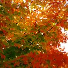 Maple Leaves by Braedene