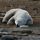 Sleeping Polar Bear by AnnetteK
