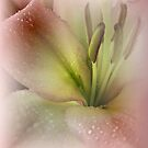 Rain Kissed Lily by Barbara  Brown