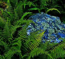 Rock, Lichen, Ferns by Richard VanWart