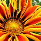Orange Delight by Kathie Nichols