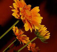 Yellow Slant by Pamela Hubbard