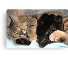 Mother Tabby Cat Suckling Four Newborn Kittens Canvas Print