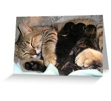 Mother Tabby Cat Suckling Four Newborn Kittens Greeting Card