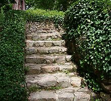 Old Stone Steps by Jenny Brice