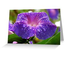 Morning Glory (Ipomoea Purpurea) Petals and Dew Drops  Greeting Card