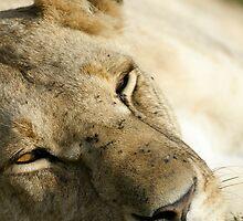 Lion by Yves Roumazeilles