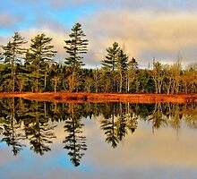 Reflections by Kathleen   Sartoris