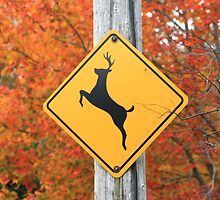 Deer Crossing by HALIFAXPHOTO