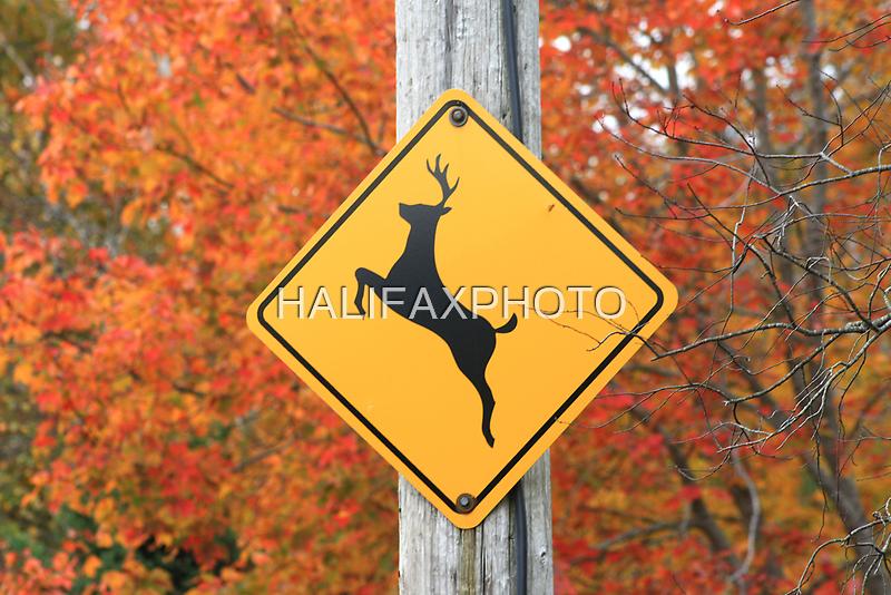 Deer Crossing by HALIFAXPHOTO