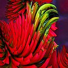 Red Hot Pokers by Casey Herman