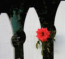 White Picket Fence by Ray4cam