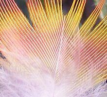 """""""fire feather"""" found in a garden bush by gaylene"""
