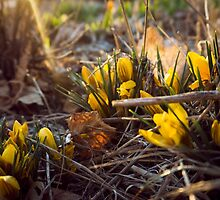 Early Spring Flowers by Brent Olson