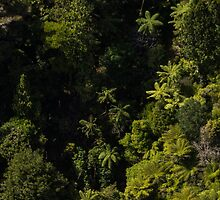 Tree Ferns from the air New Zealand by Mark Hill