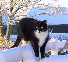 Snow Cat by Angela Harburn