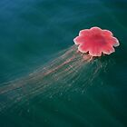 Jelly Fish by orcagirl