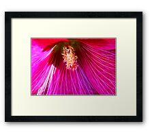 Pink Holly Beauty Framed Print