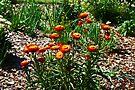 Spring Flowers by Evita