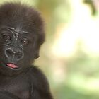 Baby Gorilla 1 by pulsdesign