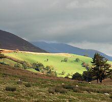 autumn landscape 2 by jon  daly