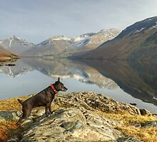 The Poise Of The Posing Patterdale by Jamie  Green