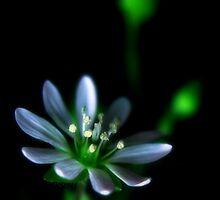 Softness by Purplecactus