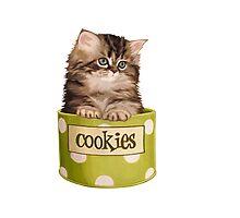 Funny Kitten Photographic Print