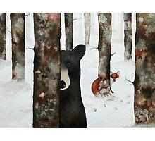 bear and fox Photographic Print
