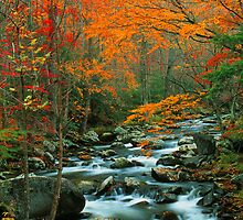 MIDDLE PRONG LITTLE RIVER,AUTUMN by Chuck Wickham