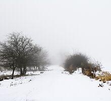 Snowy Path by AbigailJoy
