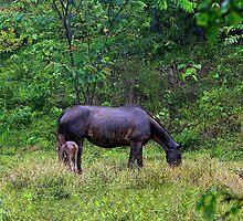 Soggy Equine Beauty in Bocas Del Toro by Al Bourassa