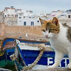 Maroc - Chat d'Essaouira by Jean-Luc Rollier