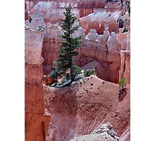 Rooted in Sandstone Photographic Print