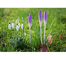 Messengers of Spring Photographic Print