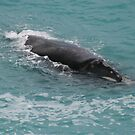 Sea-lions,whales and emus on Eyre Peninsular,S.A. by elphonline