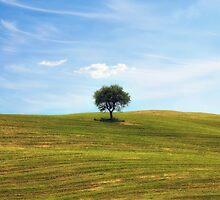 tree by Joana Kruse