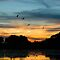 Sunset and Magpie Geese at Knuckey Lagoon by Keith McGuinness
