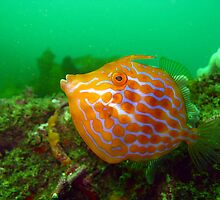 Mosaic Leatherjacket by Edjamen